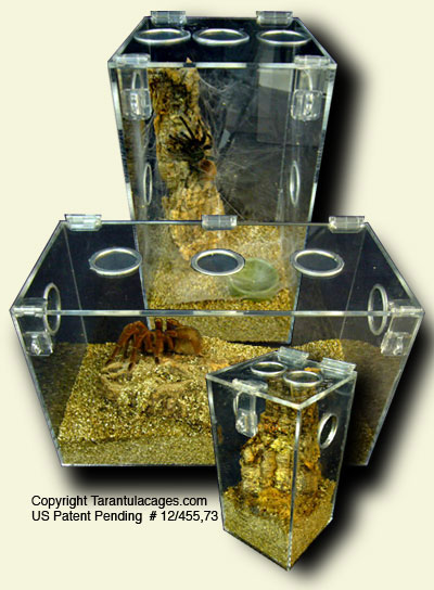 Tarantulacages Com Captive Bred Tarantulas For Sale Acrylic Cages